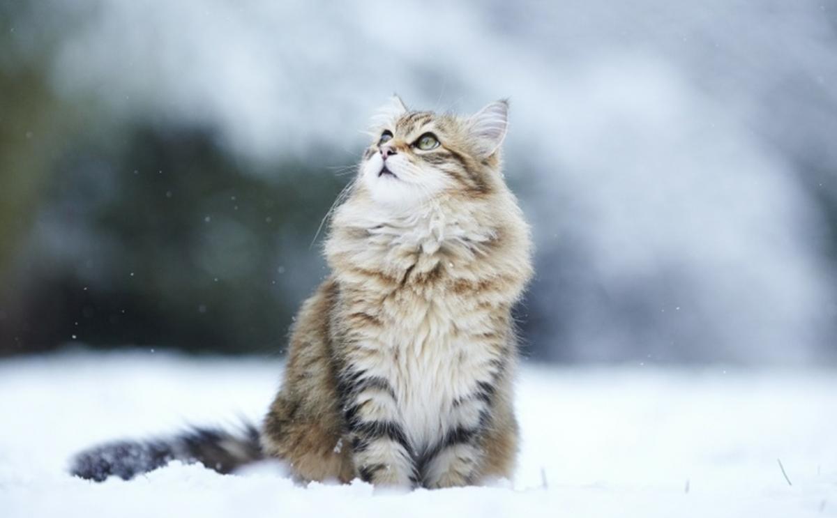 allergi vänliga katter